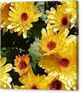 Sunny Mums Canvas Print