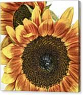 Sunny Pair Canvas Print