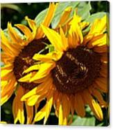 Sunny Sisters Canvas Print