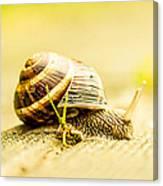 Sunny Snail Canvas Print