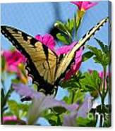 Sunny Tiger Swallowtail  Canvas Print