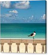 Sunny Tropical Seashore With Gull Canvas Print