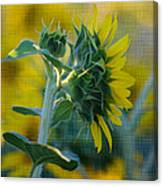 Sunny With Texture Canvas Print