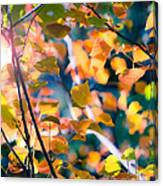 Sunny Yellow Leaves Canvas Print