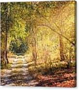 Sunray In The Autumn Forest Canvas Print