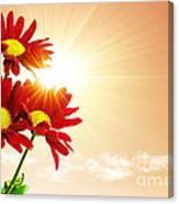 Sunrays Flowers Canvas Print