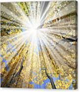 Sunrays In The Forest Canvas Print