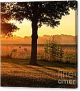 Sunrise 365 13 Canvas Print