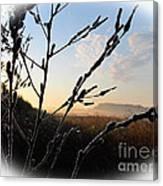 Sunrise 365 2 Canvas Print