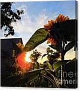 Sunrise 365 29 Canvas Print