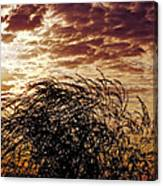 Sunrise And Lacy  Tree Canvas Print