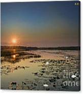 Sunrise And Water Lilies Canvas Print