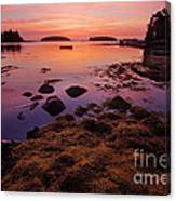Sunrise At Tenants Harbor Canvas Print
