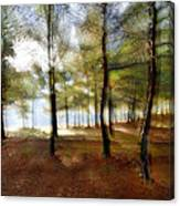 Sunrise At The Magic Forest Canvas Print
