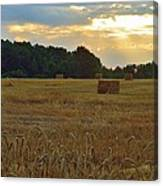 Sunrise At The Wheat Field Canvas Print