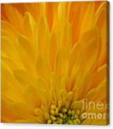 Sunrise Dahlia Abstract Canvas Print