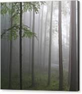 Sunrise Fog Canvas Print
