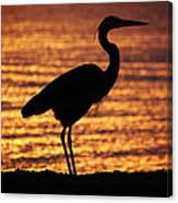 Sunrise Heron Canvas Print