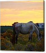 Sunrise Horse Canvas Print
