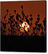Sunrise In South Texas Canvas Print