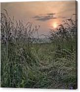 Sunrise Landscape In Summer Looking Through Wild Thistles And Gr Canvas Print