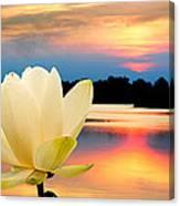 Sunrise On Lotus Lillie Canvas Print