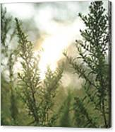 Sunrise Over Greenery Canvas Print