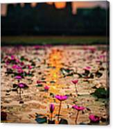Sunrise Over The Lotus Flowers Of Canvas Print