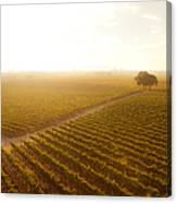 Sunrise Over The Vineyard Canvas Print
