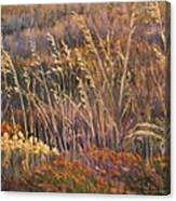 Sunrise Reflections On Dried Grass Canvas Print