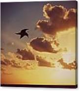 Sunrise Seagull Canvas Print