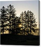 Sunrise Shines Through The Pines Canvas Print