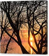 Sunrise Through The Chaos Of Willow Branches Canvas Print