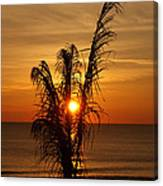 Sunrise Through The Palm Canvas Print