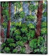 Suns Rays - Forest - Steel Engraving Canvas Print