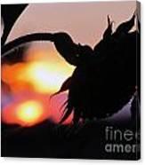 Sunset 365 19 Canvas Print