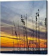 Sunset And Grasses Canvas Print