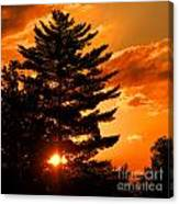 Sunset And Pine Tree  Canvas Print