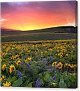 Sunset At Columbia Hills State Park Canvas Print