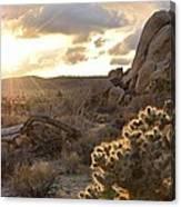 Sunset At Joshua Tree National Park Canvas Print