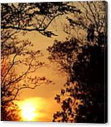 Sunset At Jungle Canvas Print