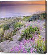 Sunset At The Beach  Flowers On The Sand Canvas Print
