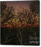 Sunset At The Presidio   Canvas Print