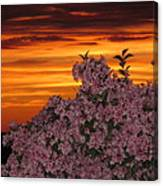 Sunset Blooms Canvas Print