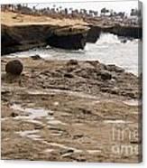 Sunset Cliffs Shoreline 2 Canvas Print