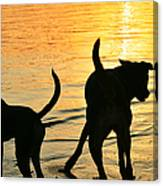 Sunset Dogs  Canvas Print
