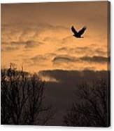 Sunset Eagle Canvas Print