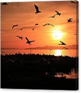 Sunset Flights Canvas Print