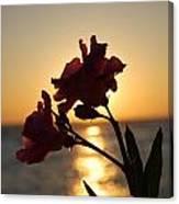 Sunset Flower 2 Canvas Print
