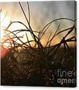 Sunset Grass 2 Canvas Print
